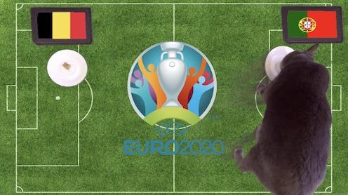 Mèo tiên tri dự đoán kết quả bóng đá Bỉ vs Bồ Đào Nha