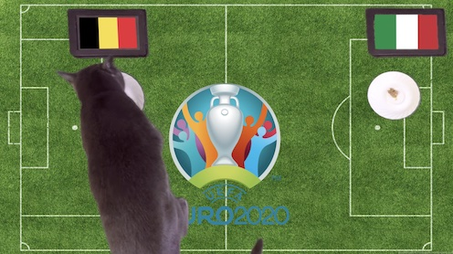 Mèo tiên tri dự đoán kết quả bóng đá Bỉ vs Italia