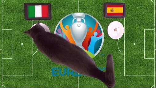 Mèo tiên tri dự đoán kết quả bóng đá Italia vs Tây Ban Nha