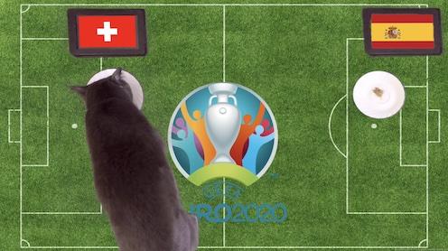Mèo tiên tri dự đoán kết quả bóng đá Thuỵ Sỹ vs Tây Ban Nha
